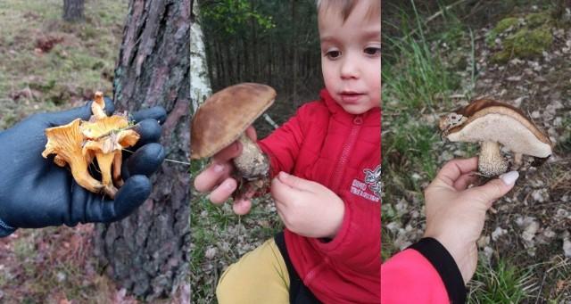 Ostatnie tygodnie były deszczowe. Efekt jest taki, że w naszych lasach zaczęły pojawiać się grzyby!