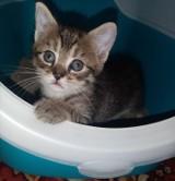 Oddam kota za darmo. To prawdziwy wysyp kotów. Mieszkańcy Oleśnicy i Sycowa oddają futrzaki. Szukają im odpowiedzialnych domów (ZDJĘCIA)