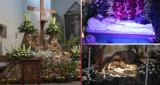 Groby Pańskie w parafiach powiatu kartuskiego - jak w tym roku przeżywamy Wielką Sobotę?