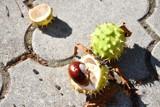 10 rzeczy, które musisz zrobić jesienią w Lesznie. Nie przegap najważniejszych wydarzeń [ZDJĘCIA]