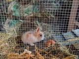 Katedra Rzeszowska rozlosuje zwierzątka z szopki [ZDJĘCIA]