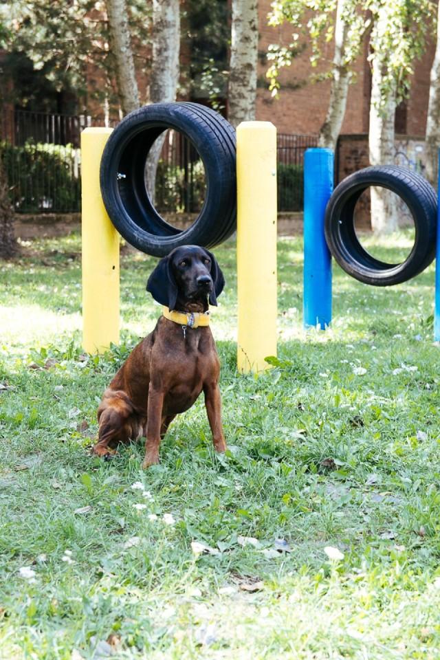 Place zabaw dla psów Mokotowie. Zobaczcie, gdzie zabrać czworonoga na spacer [ZDJĘCIA]