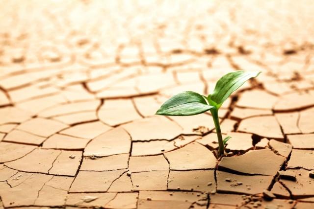 IMGW ostrzega przed suszą. Wprowadza nowy rodzaj ostrzeżenia