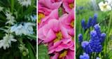 Co w trawie piszczy? Pierwsze oznaki wiosny! Zobaczcie wiosenną galerię zdjęć [ZDJĘCIA]