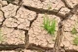 Niech pozory nikogo nie zmylą: susza hydrologiczna jest faktem. Jak możemy ją powstrzymać?