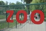 Kraków. Ewa Całus, była dyrektorka Wydziału Edukacji w Urzędzie Miasta, teraz zajmie się dydaktyką i promocją w krakowskim zoo