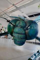 Wielkie owady wylądowały w Centrum Przyrodniczym w Zielonej Górze. To część nietypowej wystawy [ZDJĘCIA, WIDEO]