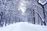 Taka będzie pogoda zimą 2021. Długoterminowa prognoza pogody. Czy możemy spodziewać się srogich mrozów i opadów śniegu w styczniu i lutym?