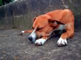 Zabił psa siekierą i widłami. Świadkami byli turyści