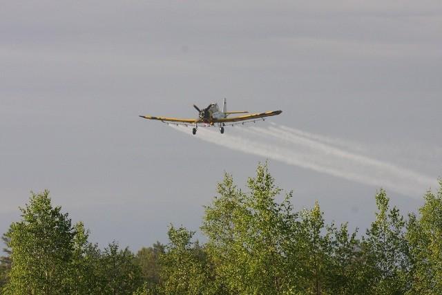 Dziś zakończą się dwudniowe lotnicze zabiegi ratownicze drzewostanów sosnowych