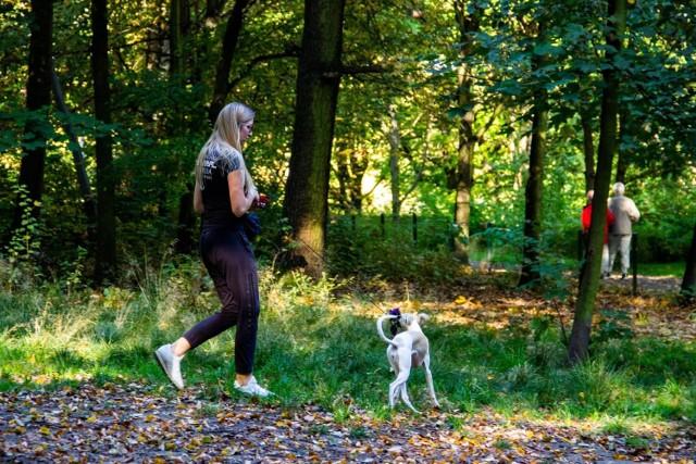 Psi wybieg w Parku Śląskim zostanie oddany do modernizacji. Jakie nowości pojawią się 1 grudnia na terenie psiej rekreacji? Przeczytaj.