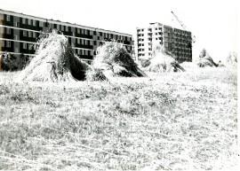 Tak powstawało osiedle Dolinki w Gorzowie (NIEZNANE ZDJĘCIA