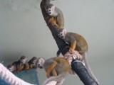 Śląski Ogród Zoologiczny ma nowych lokatorów. Zobacz jakich