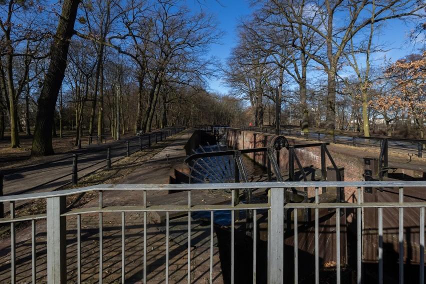 Nowe pomniki przyrody, to skupisko sześciu buków pospolitych...