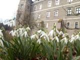 Wiosna zawitała do parku-arboretum w Gołuchowie ZDJĘCIA