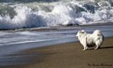 Morze Tyrreńskie, morzem wyjątkowym! [Zdjęcia]