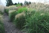 Zobacz jak kwitną trawy i jesienne kwiaty