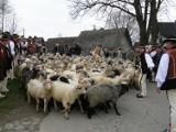 W Ludźmierzu górale święcili owce