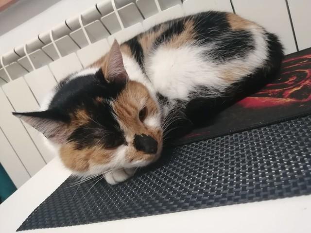 Z okazji Światowego Dnia Kota poprosiliśmy naszych czytelników o przesłanie zdjęć swoich kochanych mruczków. Zobaczcie piękne koty.   Zobacz kolejne zdjęcia. Przesuń zdjęcia w prawo - wciśnij strzałkę lub przycisk NASTĘPNE