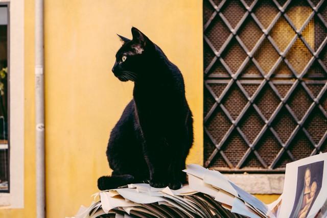 """Ponad połowa Polaków wierzy w przesądy. Mamy nadzieję, że czarny kot nie przeszedł wam dziś drogi a widząc kominiarza złapaliście się za guzik. Zdecydowanie większa część Polaków wierzy w pozytywne przesądy, które zwiastują szczęście. CBOS w badaniu """"Przesądy wciąż żywe"""" zapytał respondentów o to w jakie przesądy wierzą. Wyniki są zaskakujące. Sprawdźmy, w co wierzymy i skąd wzięły się najpopularniejsze wśród Polaków przesądy.  Najbardziej przesądni Polacy to renciści, bezrobotni, robotnicy niewykwalifikowani, pracownicy usług i gospodynie domowe. Osoby starsze są zdecydowanie bardziej podatne na działanie przesądów niż młodsi. W magiczną siłę przedmiotów lub zachowań częściej wierząkobietyniż mężczyźni."""