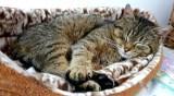 Pluszaki dla kociaków z przytuliska! Koci Azyl,  prosi o wsparcie.