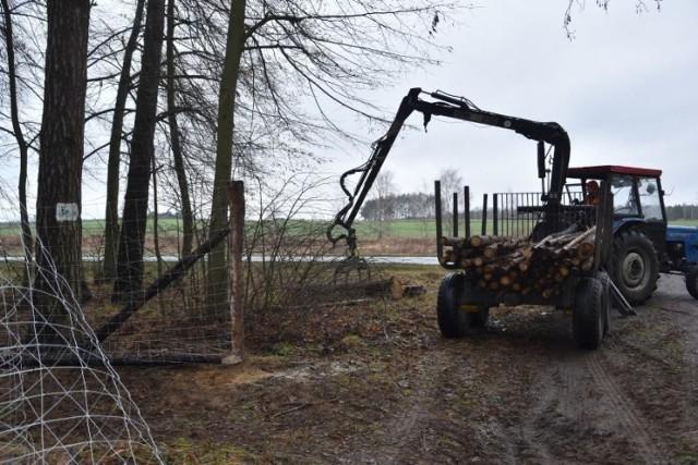 Ogrodzenia, które mają ograniczyć przemieszczanie się dzików ustawiono już m.in. w Wielkopolsce
