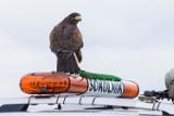 Zwierzęta i ptaki na służbie. Pracują w regionie! [zdjęcia]