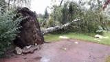 Nawałnica nad Siemianowicami. Uszkodzone dachy oraz przewrócone drzewa [ZDJĘCIA]