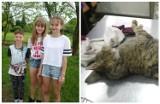 Dzieciaki ze Świerklan próbowały uratować kotka. Okryły zwierzę swoim ubraniem. Wzruszająca historia
