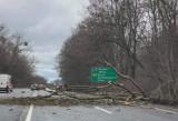 Drzewo przewróciło się na samochód osobowy w Zabrzu. Są utrudnienia w ruchu