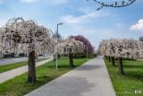 Pleszew. To już wiosna w pełni! To miejsce w Pleszewie zachwyca. Jest magicznie!