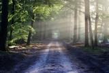 Więcej lasów w oleśnickim nadleśnictwie niż w 1945 roku