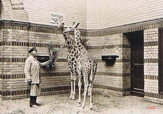 Zoo we Wrocławiu przed II wojną światową