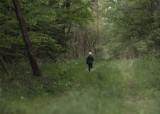 Las Odrzański to niezwykłe miejsce. Poczujesz się tu jak w baśniowej krainie. Dlaczego warto się tu wybrać na wycieczkę?