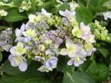 Kwiaty lata 2012