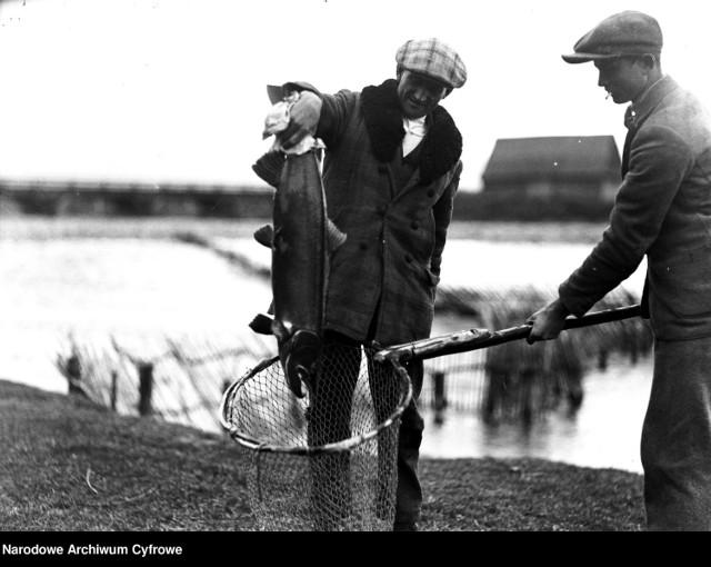 Wędkowanie na archiwalnych zdjęciach. Wędkowanie na archiwalnych zdjęciach. Wylęgarnia ryb łososiowatych w Nowym Targu - wyjmowanie sakiem złowionego na wędkę łososia. 1930 rok.