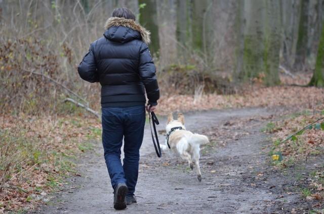 Jeśli utknęliśmy na kwarantannie w Sosnowcu i potrzebujemy, żeby ktoś wyszedł na spacer z naszym psem to możemy zgłosić się z prośbą o pomoc w nowej grupie