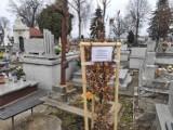 Mieszkaniec Jasła oburzony nasadzeniem drzew na Starym Cmentarzu [ZDJĘCIA]