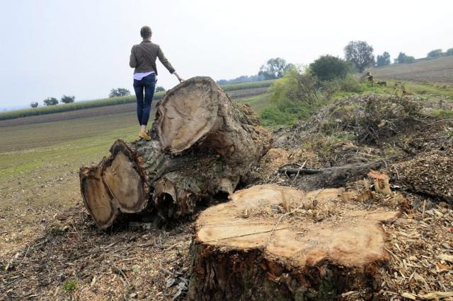 Zdjęcia z planowanego łącznika. Mieszkańcy są oburzeni wycięciem drzew