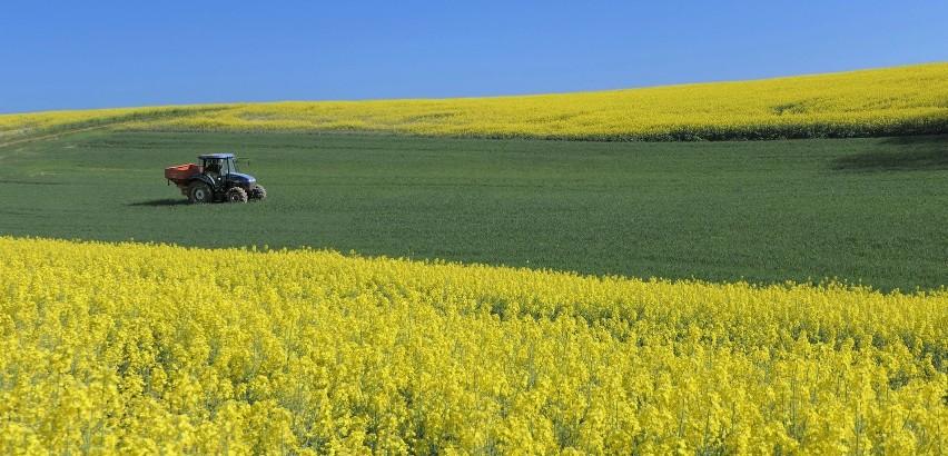 Prowadzisz gospodarstwo rolne? Maszyny rolnicze, hodowla zwierząt, środki ochrony roślin. Na czym polega nowoczesne rolnictwo?