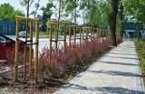 Nowy Sącz. W Parku Strzeleckim sadzą nowe rośliny. Będzie ich ponad 24 tysiące [ZDJĘCIA]