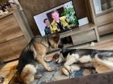 """Po pożarze w MPO psy ze schroniska w Białymstoku trafiły do domów tymczasowych. Zobacz urocze zdjęcia zwierzaków """"na urlopie"""" [ZDJĘCIA]"""