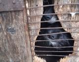 Psy żyły zamknięte w stodole, bez jedzenia i picia ZDJĘCIA