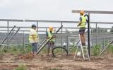 Czysta energia i... miód. Ruszają budowy nowych farm fotowoltaicznych w Sulechowie!