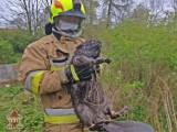 Byczyna. Nietypowa akcja strażaków. Druhowie z OSP uratowali bobra