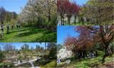 Arboretum w Wojsławicach - zobacz jak tam było w miniony weekend!