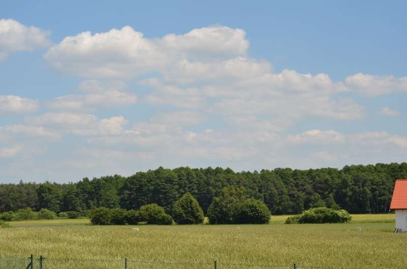 Linia Lasu w Modliszewku - tam ma iść s5