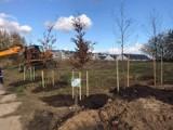 Drzewa i krzewy przy zbiorniku Kolorowy w Gdańsku Łostowicach oraz stojaki rowerowe we Wrzeszczu. Rady dzielnic inwestują