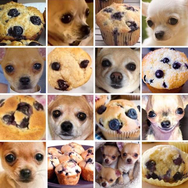 Psy, które wyglądają jak zupełnie co innego. Nowy absurdalny hit Internetu