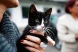 Sterylizacja i kastracja zwierząt w Poznaniu: Trwa akcja, która ma ograniczyć rozmnażanie się psów i kotów w mieście